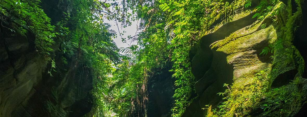 Millennium Cave in Vanuatu feat