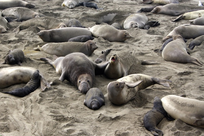 seal colony