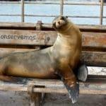 things to do on san cristobal galapagos