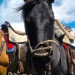 Horse riding in Cotopaxi, Ecuador