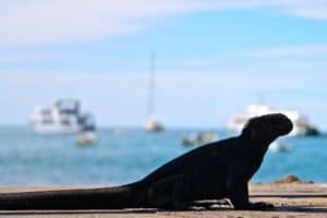 wildlife-of-the-galapagos-islands-photography