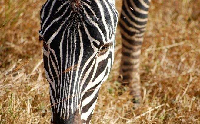 photography-tours-tanzania