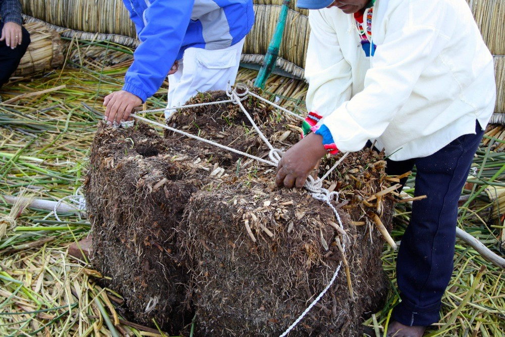 Locals bind reed for laying foundations on the Uros floating islands, Peru