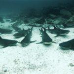 Diving the Galápagos