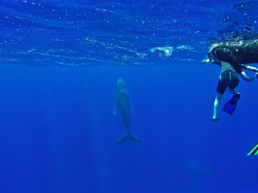 swimming-with-whales-tonga - 1