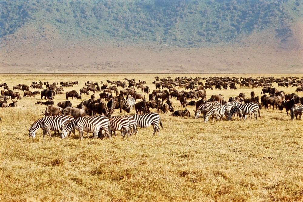 best-national-parks-in-the -world-serengeti