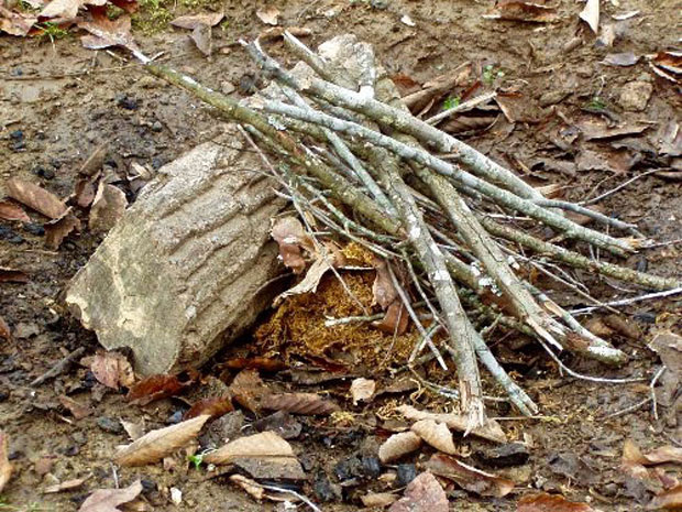 How-to-build-a-campfire-lean-to-2