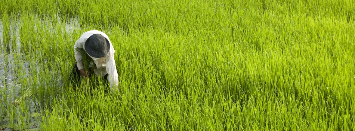 greenest-country-in-the-world-feat-img-vietnam-farmer
