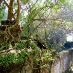 best time to visit Angkor Wat: Beng Mealea