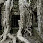 angkor wat leaf image