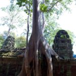 best time to visit Angkor Wat: View of Ta Prohm