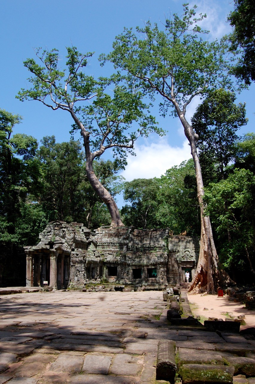 best time to visit Angkor Wat: Ta Prohm