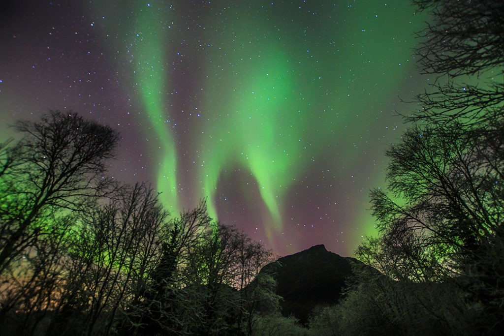 Chasing the northern lights in Tromso new trees