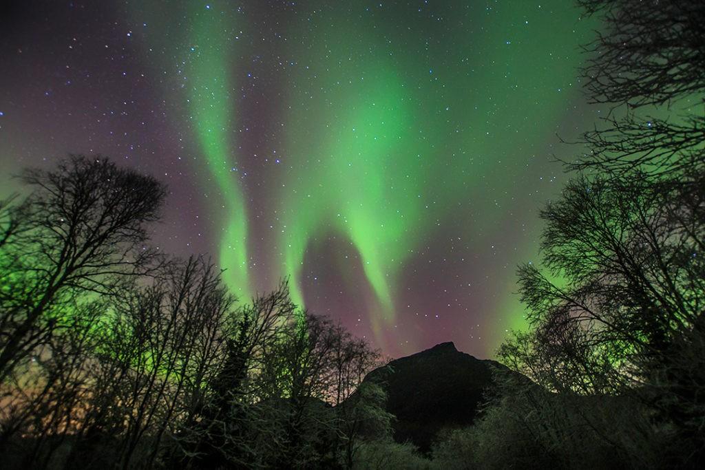 В погоне за северным сиянием в Тромсе новые деревья 20 интересных фактов о Арктике 20 интересных фактов о Арктике Chasing the northern lights in Tromso new trees 1024x683