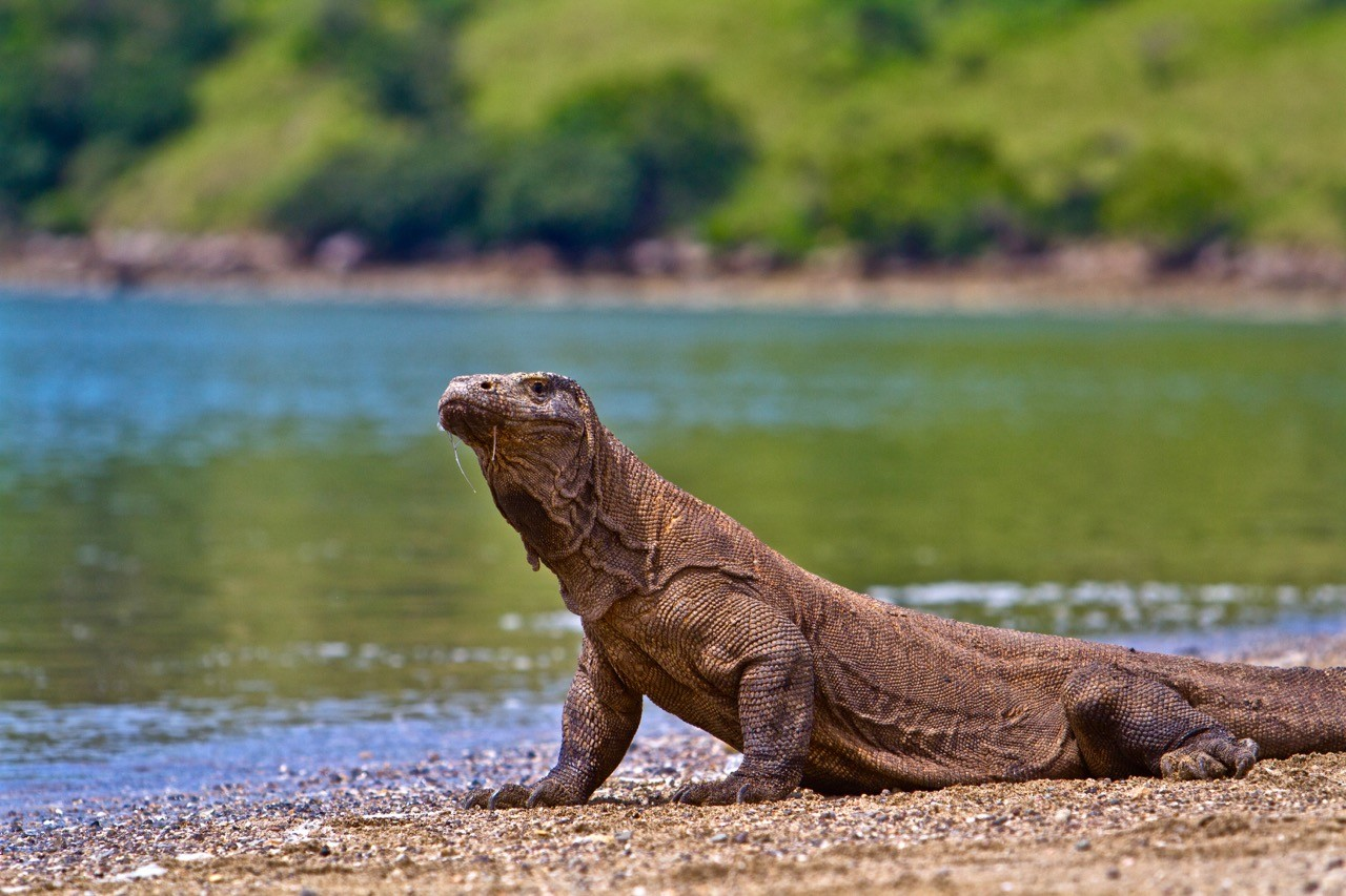 landscapes-affected-by-climate-change-komodo
