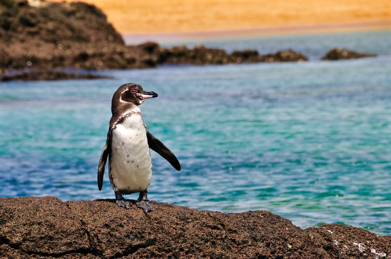 landscapes-affected-by-climate-change-galapagos