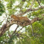 Best national parks in Sri Lanka for leopards is yala