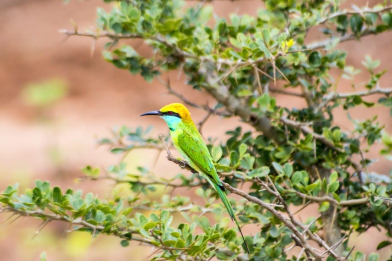 best national parks in sri lanka