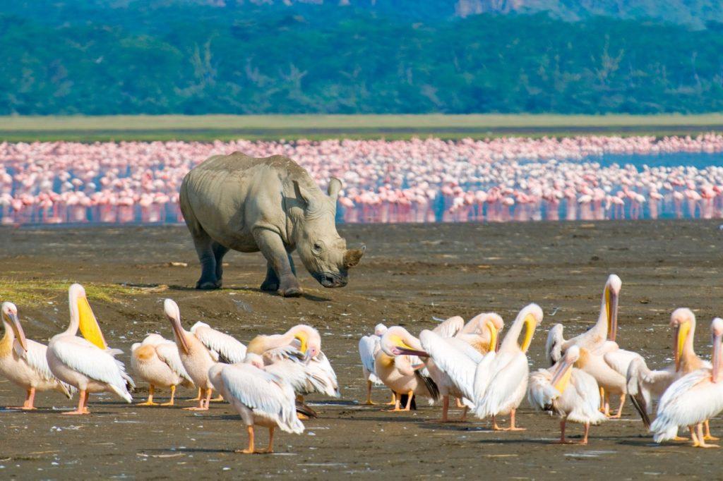 Countries for spotting rare wildlife - rhino kenya
