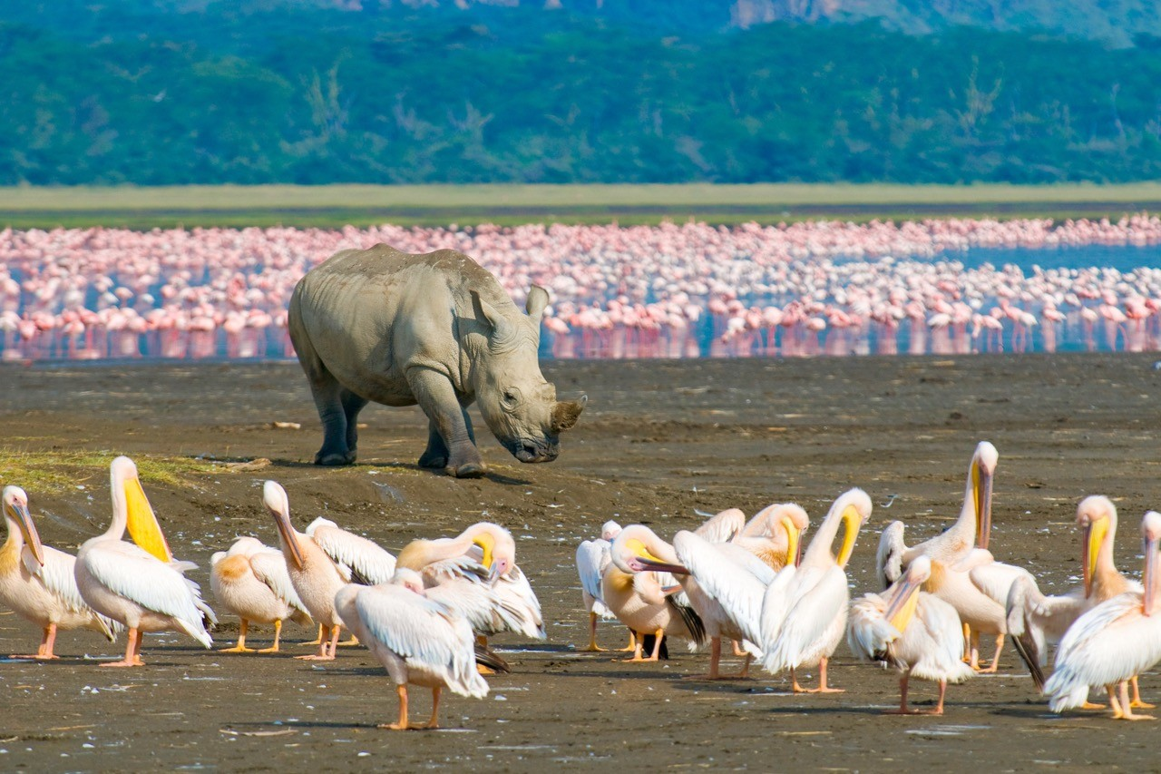 Countries for spotting rare wildlife - rhino kenya
