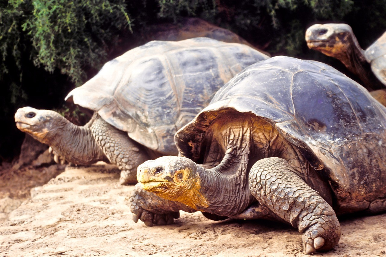 Countries for spotting rare wildlife - the galapagas