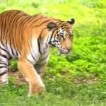 eco-friendly wildlife tours