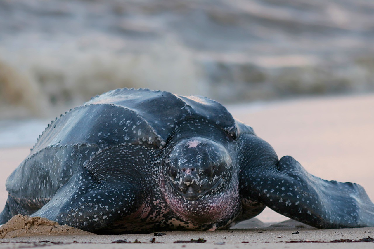 Countries for spotting rare wildlife - turtles costa rica