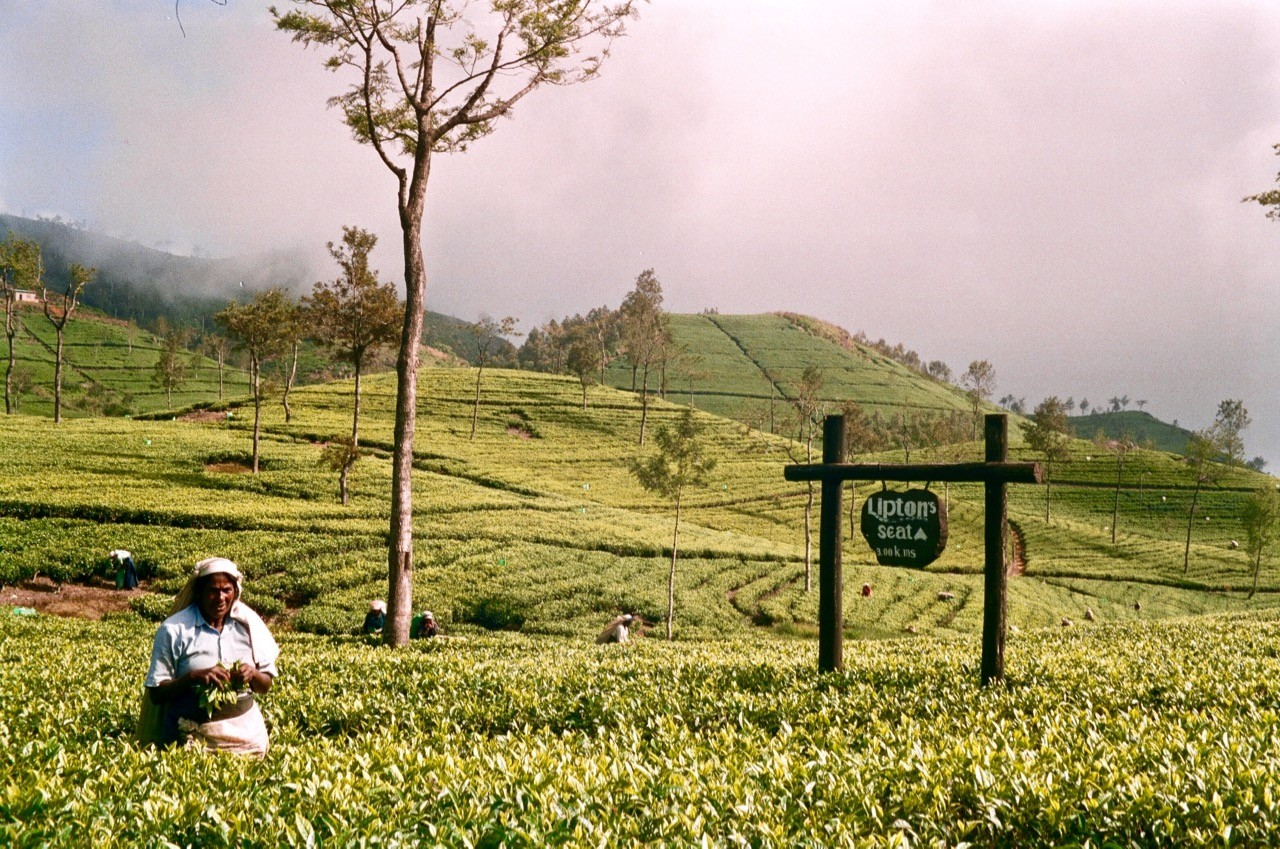 interesting facts about Sri Lanka Lipton tea