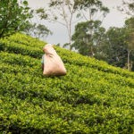 Hiking-trails-around-Ella-Sri-Lanka-featimg
