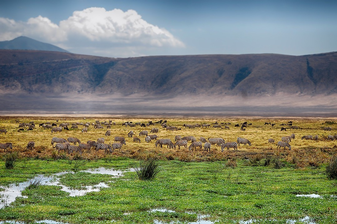 Safari photography tips - wide shot