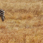 Safari photography tips: how to shoot wildlife (with a camera)