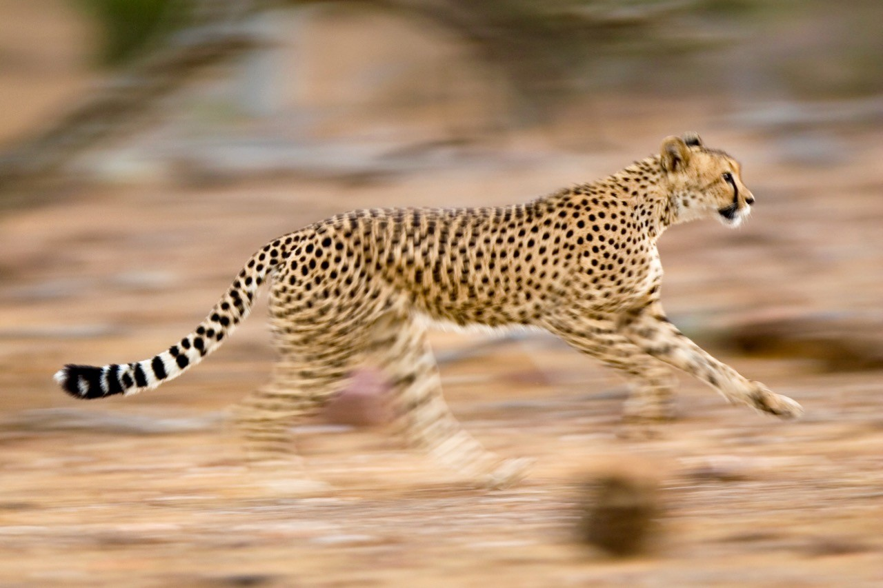 Safari photography tips panning blur