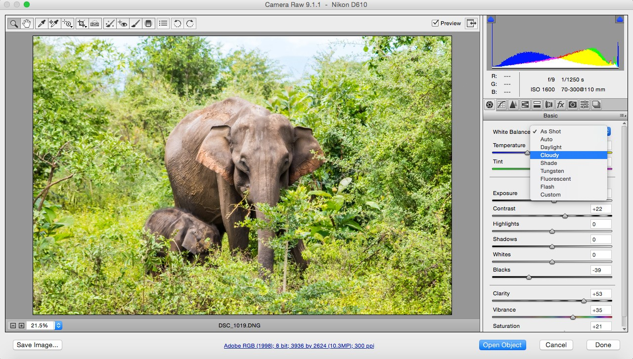 Safari-photography-tips-white-balance
