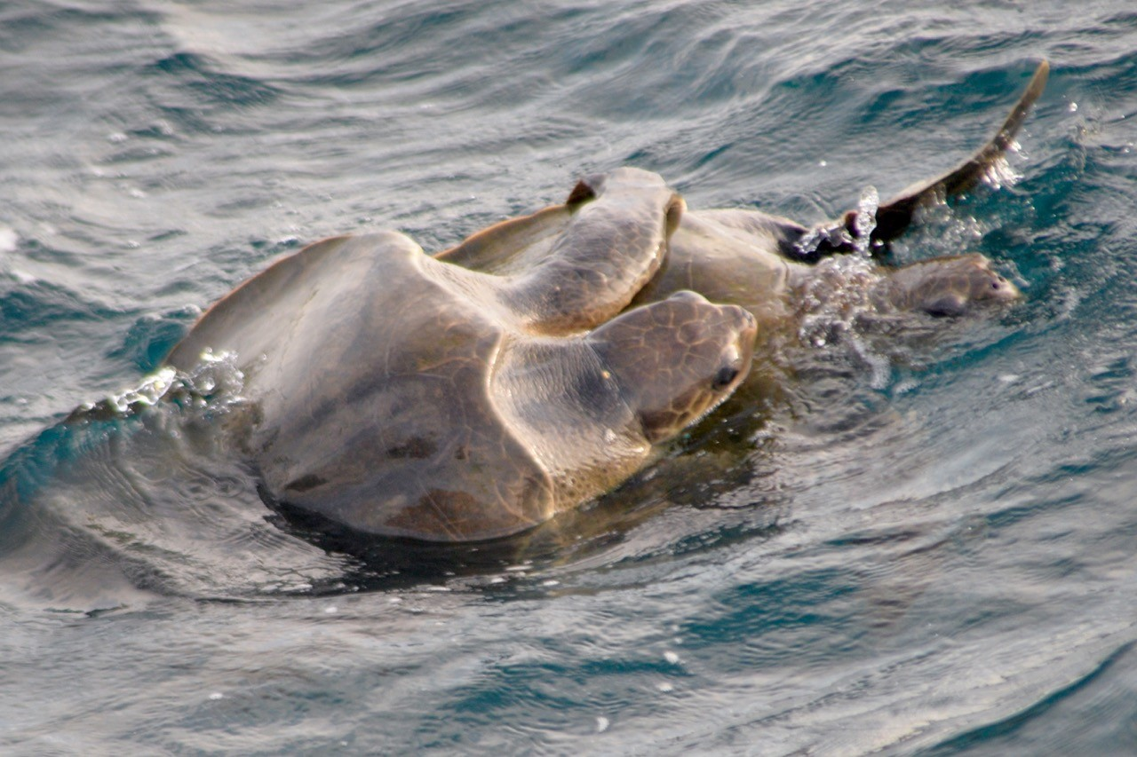 Turtles on our trip whale watching in Mirissa