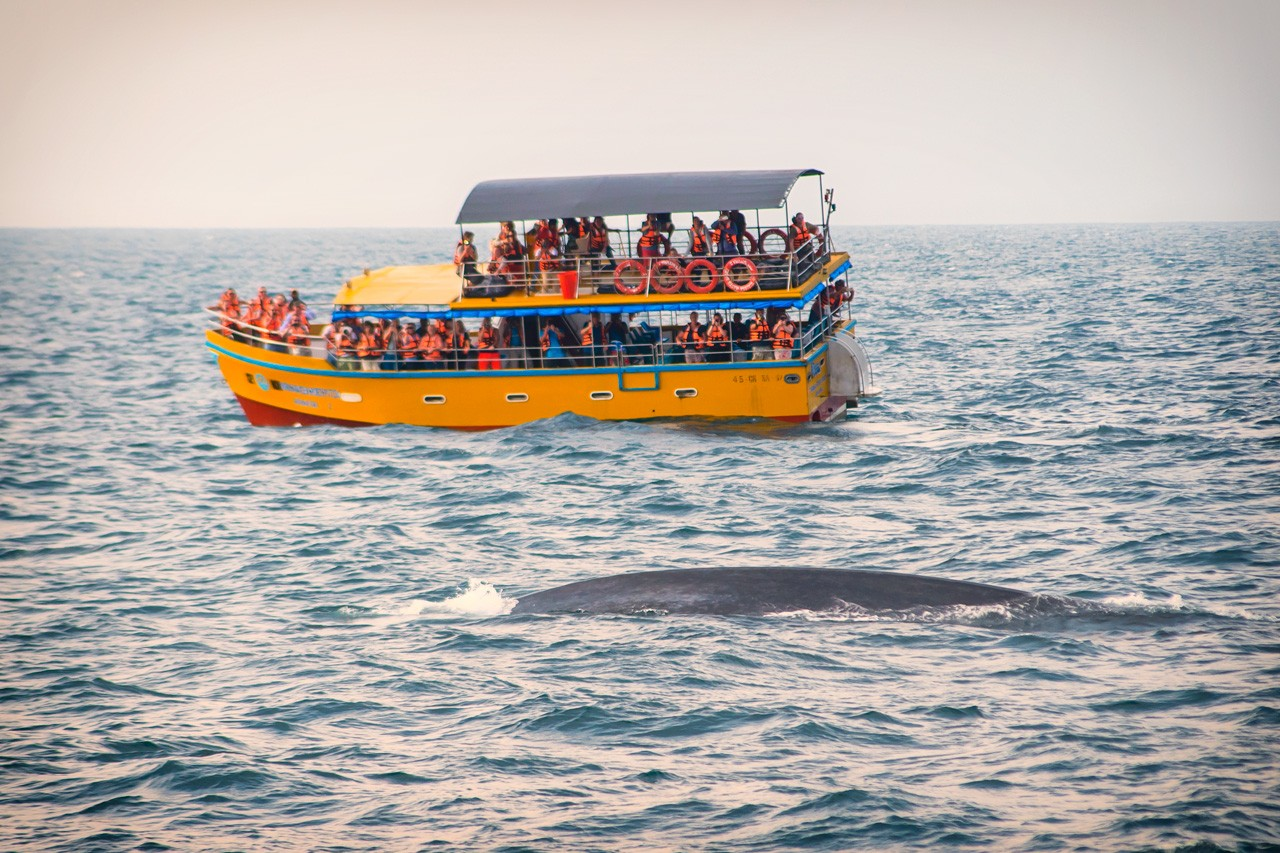 One of the many boats whale watching in Mirissa