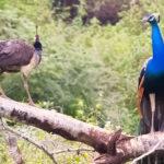 best-national-parks-in-Sri-Lanka-featimg