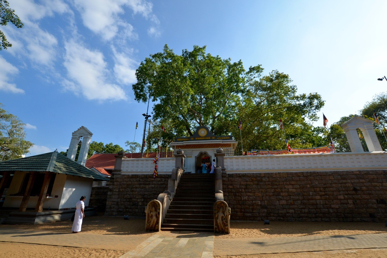 Sri Maha Bodhi is the oldest living tree known to be planted by man