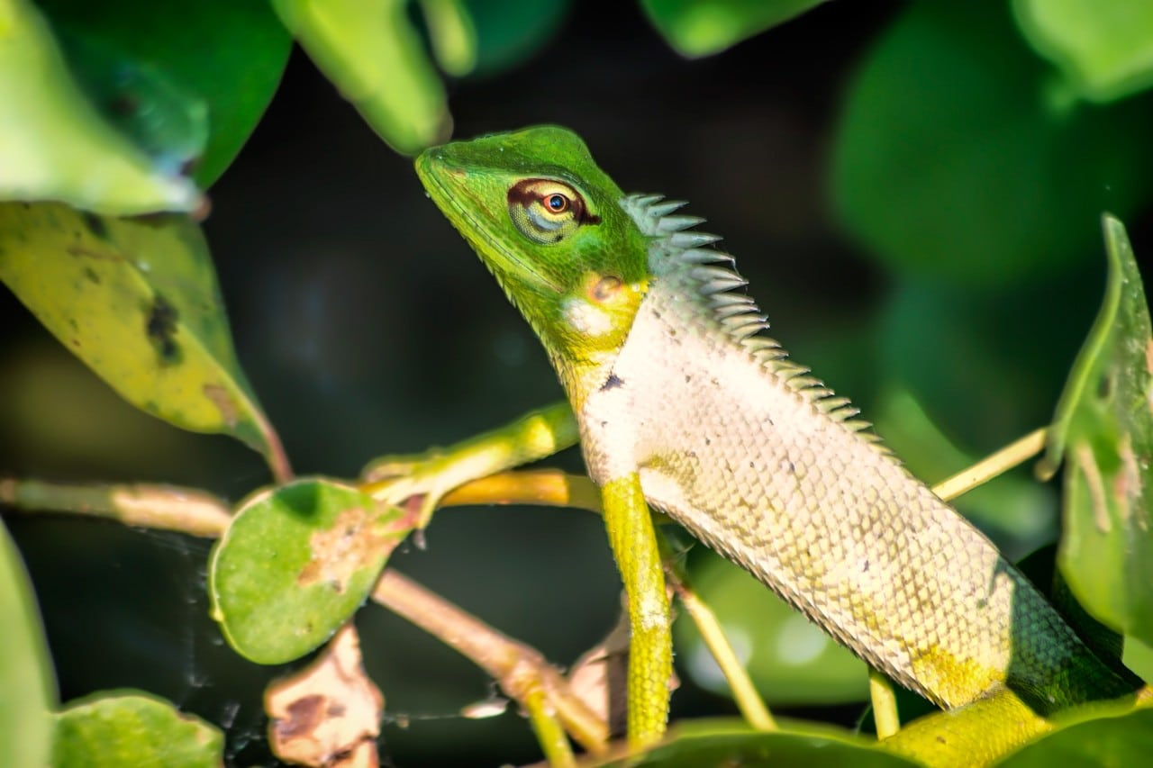 A crafty chameleon spotted on our Bentota river safari