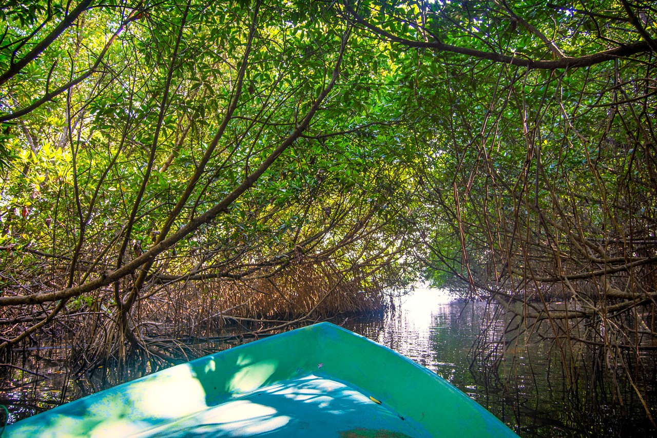 Floating through a canopy of mangroves on the Bentota river safari