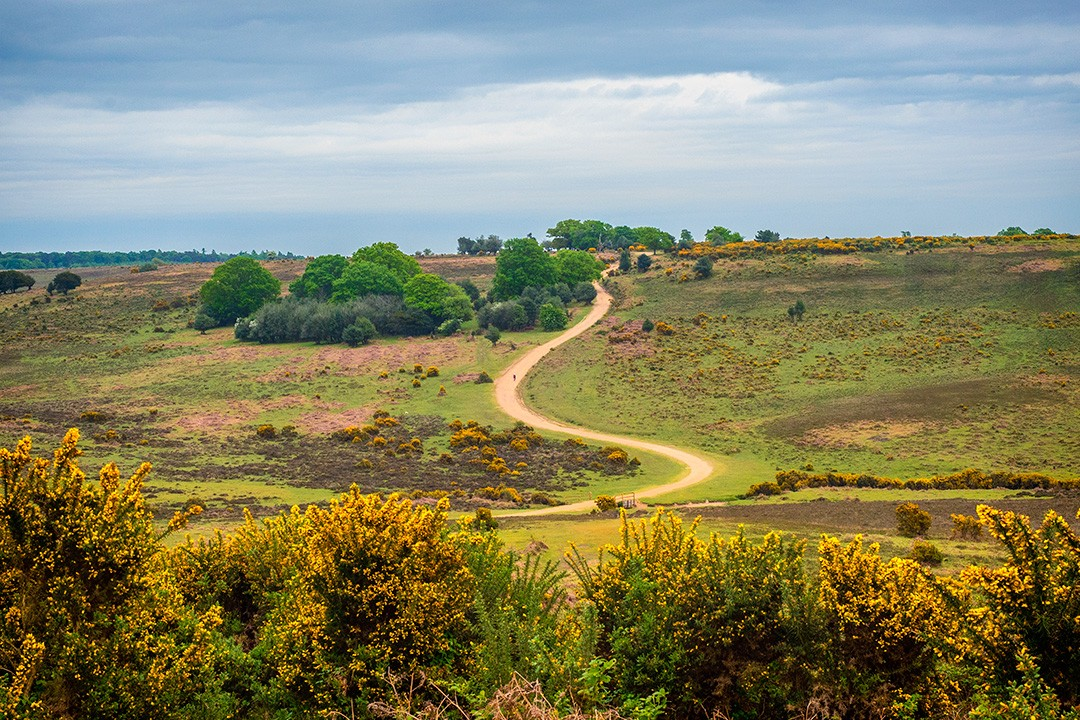 Best viewpoints in the New Forest National Park Ashley Walk
