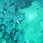 Diving at Blue Bay Mauritius-4