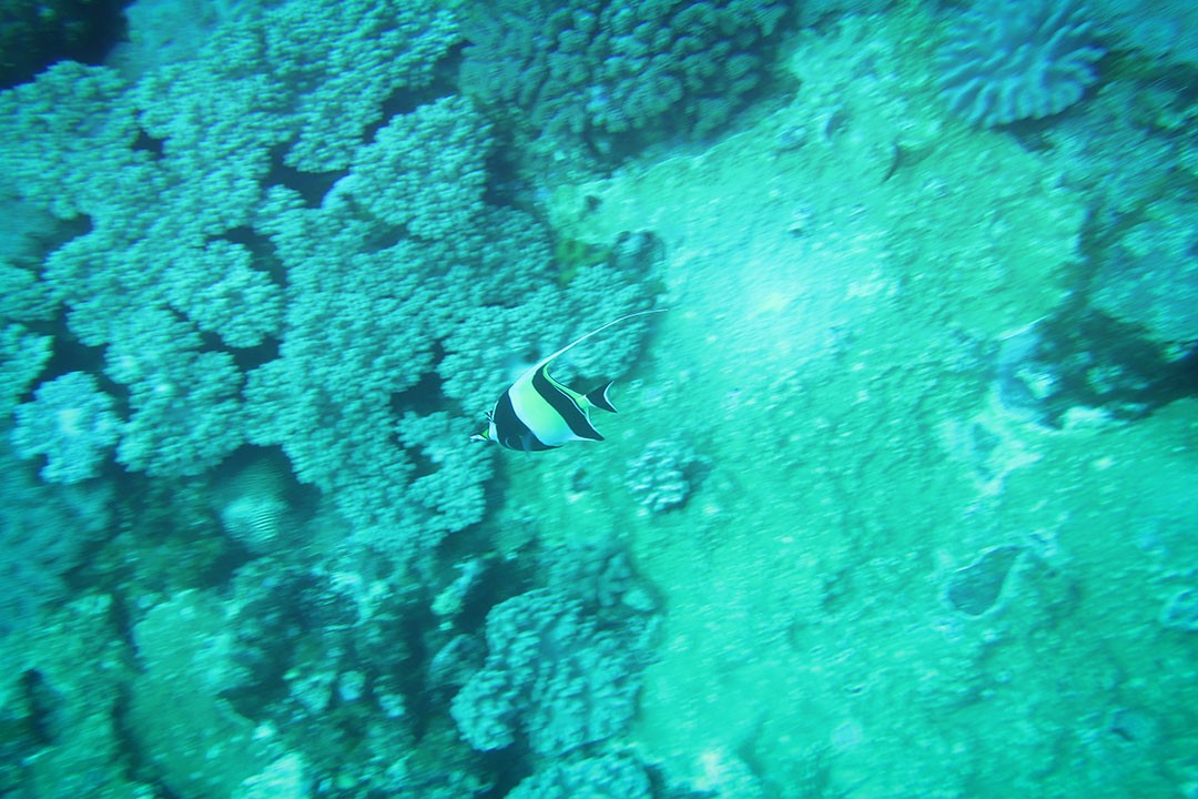 Diving at Blue Bay Mauritius-4