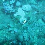 Diving at Blue Bay Mauritius-5