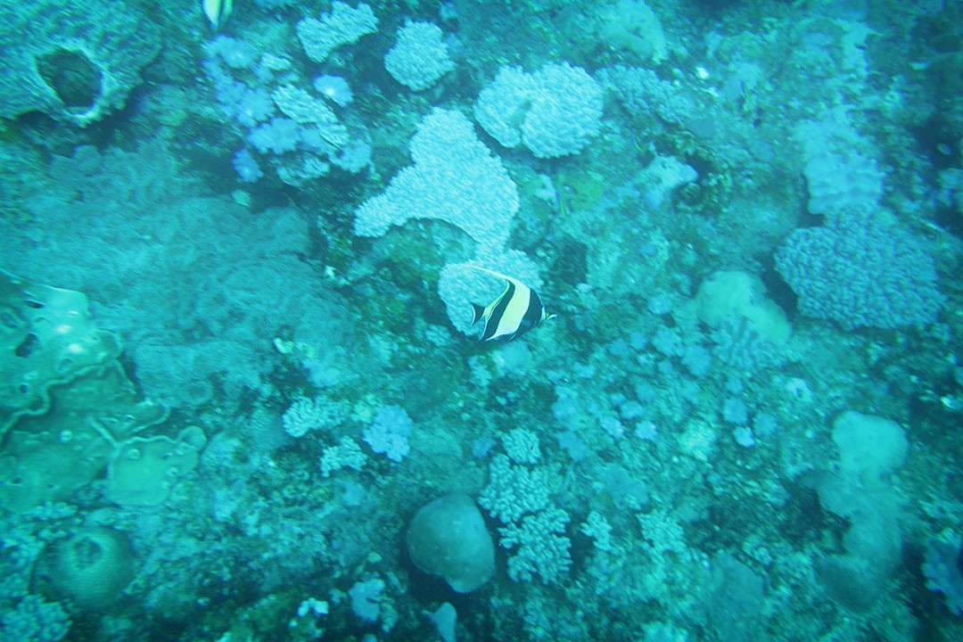 Diving at Blue Bay Mauritius-5