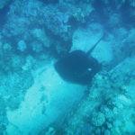 Diving at Blue Bay Mauritius-1