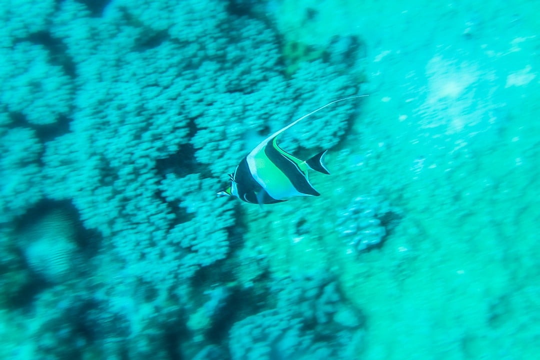 Diving-at-Blue-Bay-Mauritius-9