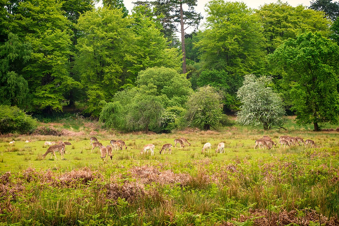 New-Forest-cycling-routes-3-deer-sanctury