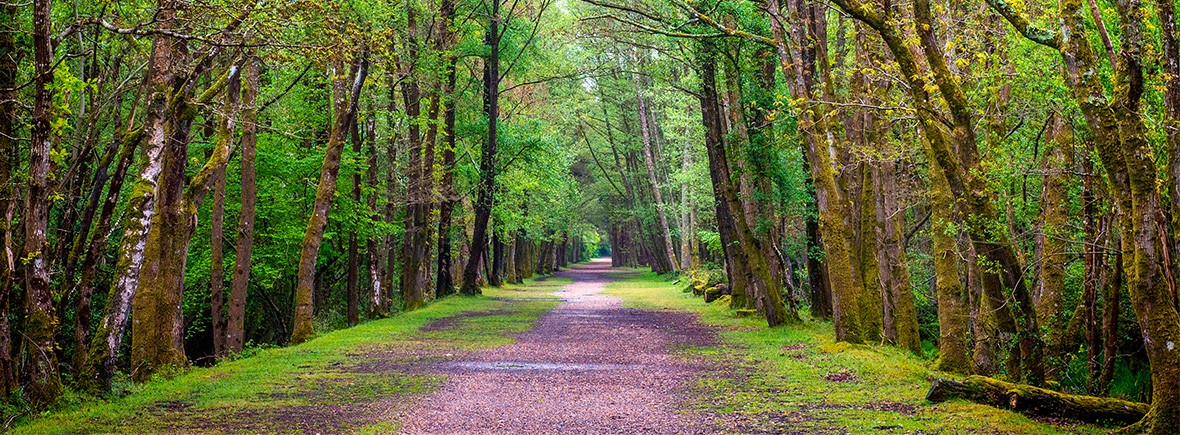 New-Forest-cycling-routes-featimg