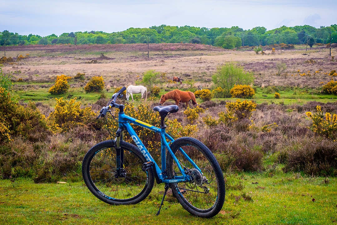 5 Of The Best New Forest Cycling Routes Atlas Amp Boots