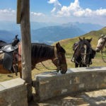 A trio of horse graze on our horse riding trip in Montenegro
